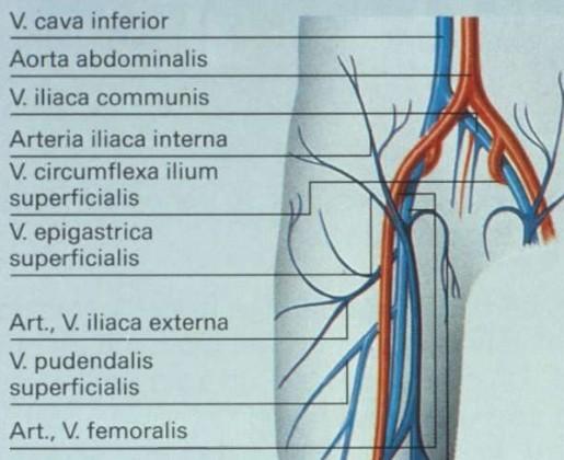 Duplexonderzoek van de vena saphena magna
