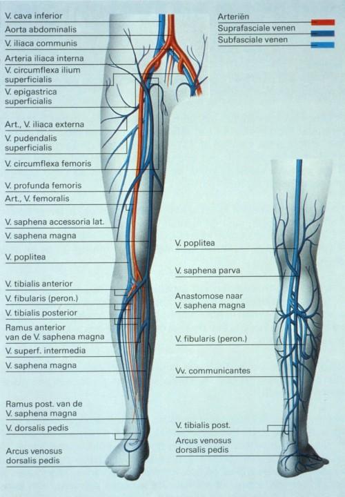 duplex veneus benen